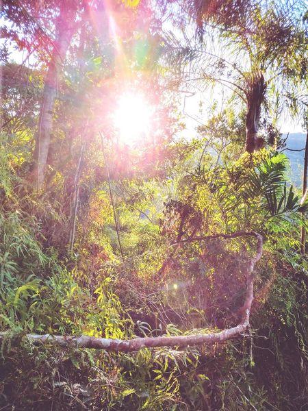 Tree Sunlight Sun Lens Flare Sky Close-up