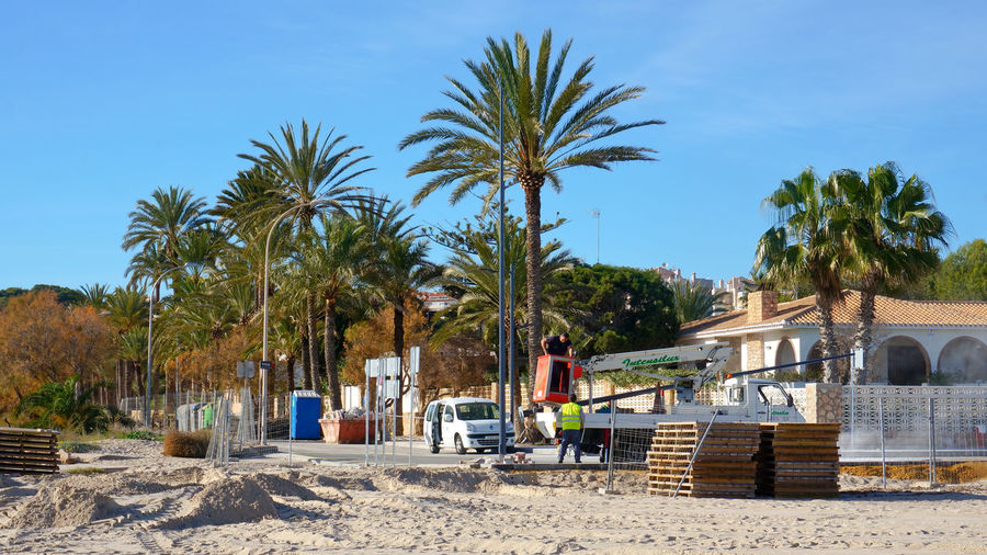 Panoramic shot of palm trees against blue sky