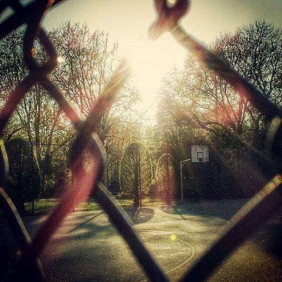 Sport Field Sportplatz Basketball basket Korb Zaun fence tree baum sun Sonnenstrahlen sunbeam sunray picoftheday nice