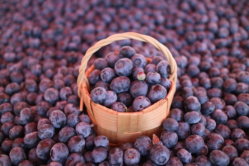 💜 Basket Healthy Eating Freshness Food Food And Drink Large Group Of Objects Fruit No People Abundance Outdoors Day Close-up Market Blueberries Finland Helsinki