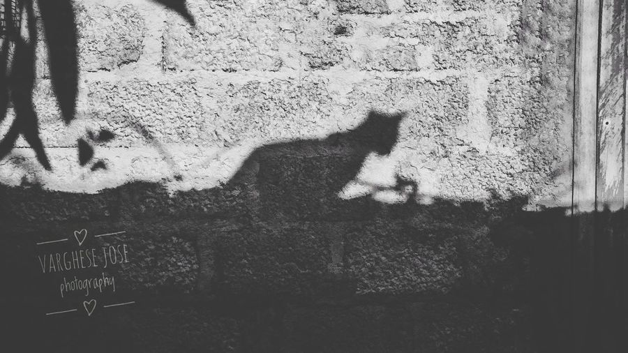 Cat Lovers Cat Photography Shaddow And Light Silhouette Monochrome Photography Blackandwhite