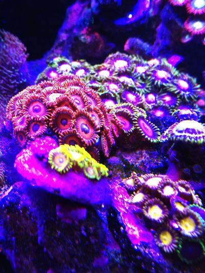 Reefing Reefer First Eyeem Photo