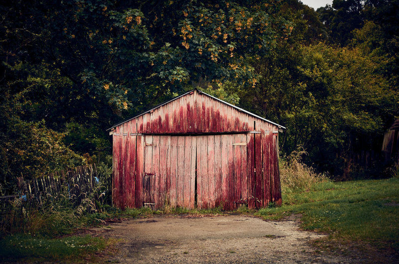 Old barn on field by trees in forest