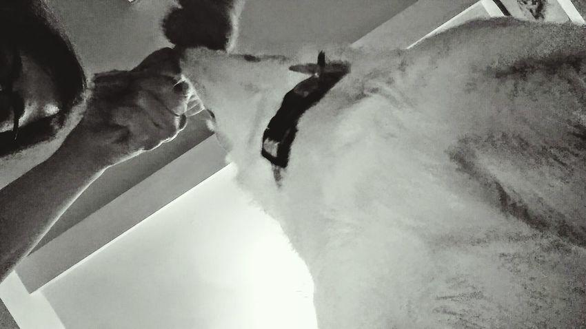 Me, Lulu and Mr. Froggy. Dramatic Angles Dogs Of EyeEm Dog Portrait Dog Dogs Dog Life Black & White Black And White Photography Blackandwhitephotography White Dog