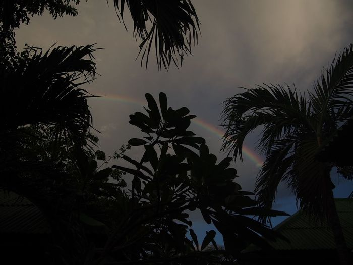 Tree Sky Plant Silhouette Low Angle View Growth Nature Beauty In Nature Tropical Climate Palm Tree No People Plant Part Cloud - Sky Leaf