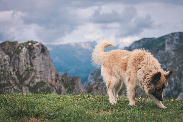 Dog standing on field against mountains