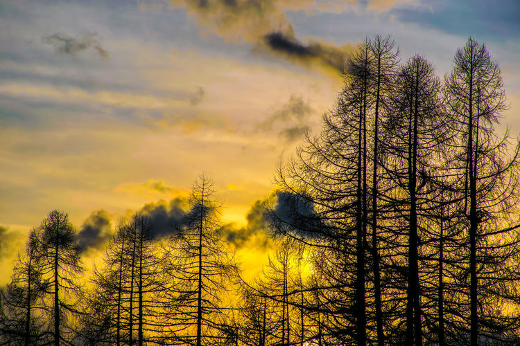 Sunset Trees Sunset Cloud - Sky Blue Sky Blue