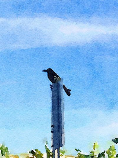 Purple Martin-Watercolor Blue Low Angle View Bird Animal Themes Animals In The Wild No People Sky Day Outdoors One Animal Animal Wildlife Nature Tree Perching Mammal Eyeem Painters Photography To Paint EyeEm This Week On Eyeem Fresh On Eyeem  Multitalented Painter - Artist Painters Painting Single Object