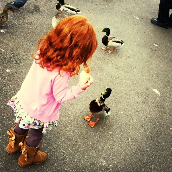 """?? """"my shoes match your hair! Quack!"""" Ducks Redhead Parklife Family"""
