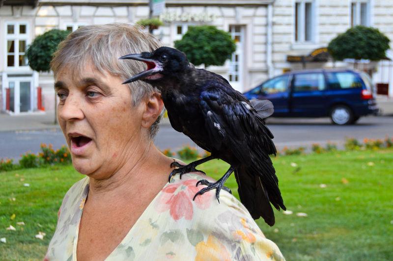 Close-up of man feeding bird