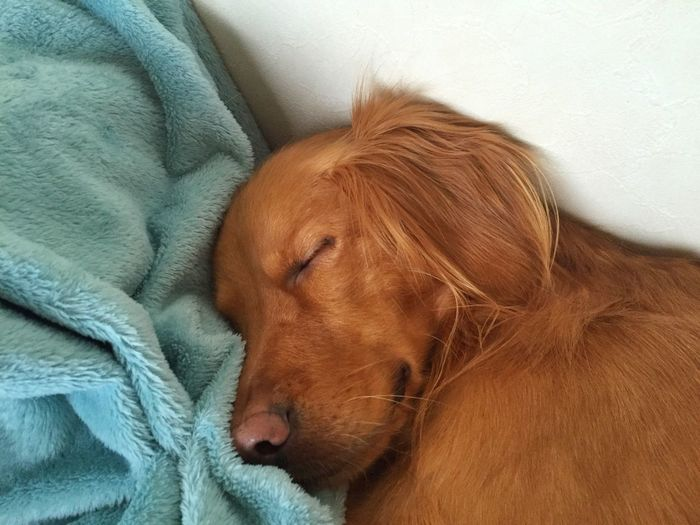 Close-up of dog relaxing at home