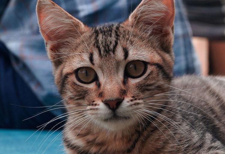 Cat Pets Animal