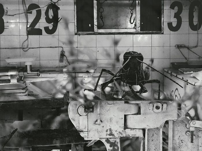 Multiple Exposure Of Spider In Abandoned Factory