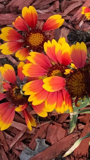 Beautiful flowers in my best friends garden. So pretty. Bee's included. Flower Petal Flower Head Nature Growth Beauty In Nature Plant Vibrant Color Outdoors Pspauly63