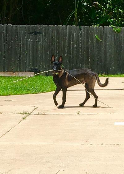 Dog running on footpath