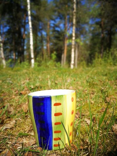 coffee in THE forest Lagom Green Color Climate Forestbathing Tree Forest Rural Scene Pine Tree Field Close-up Grass Landscape Drink Can Grass Area