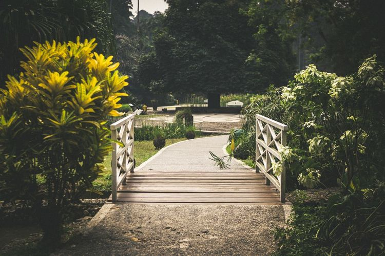 Little white bridge in a park