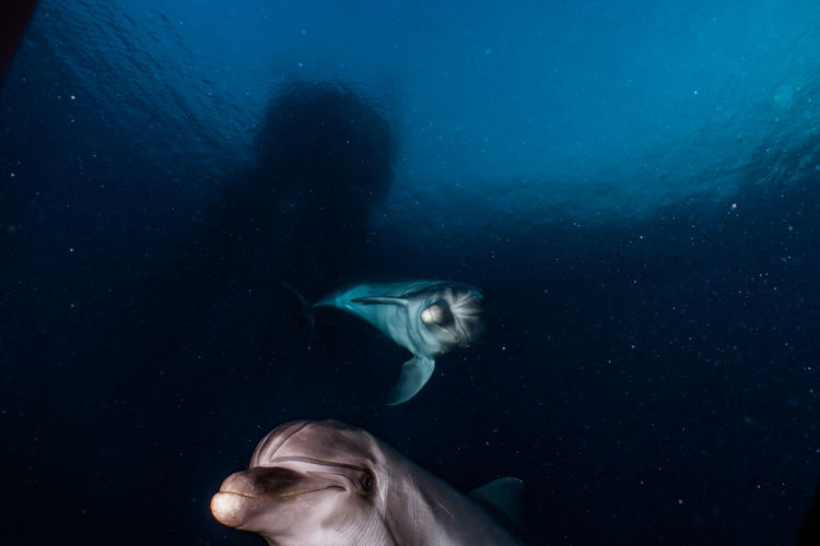 Dolphin swimming undersea