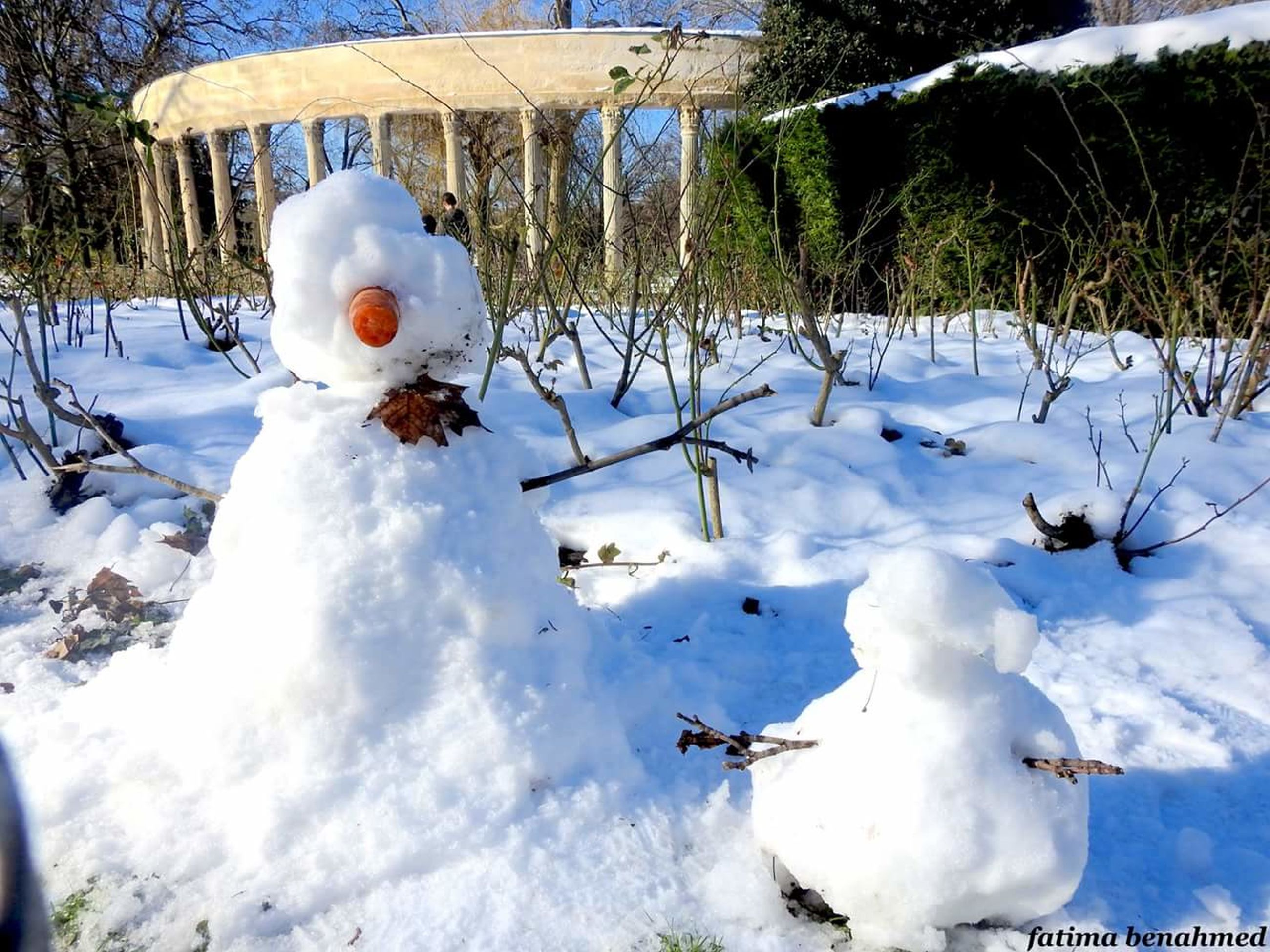 snow, cold temperature, winter, white color, nature, field, day, outdoors, growth, no people, beauty in nature, snowman, tree