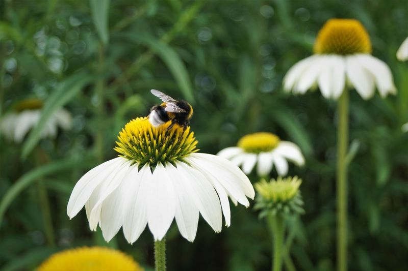 Honey bee pollinating on flower