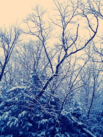Nature Trees Snow Outdoors