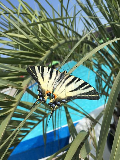 Close-up of butterfly on palm leaf