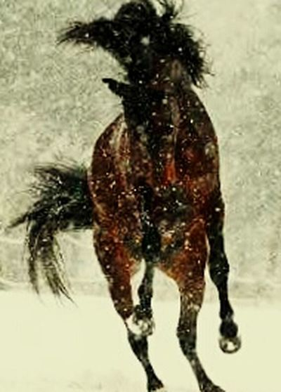 Amazing_captures Horses Are My Life Such Intelligence These Have
