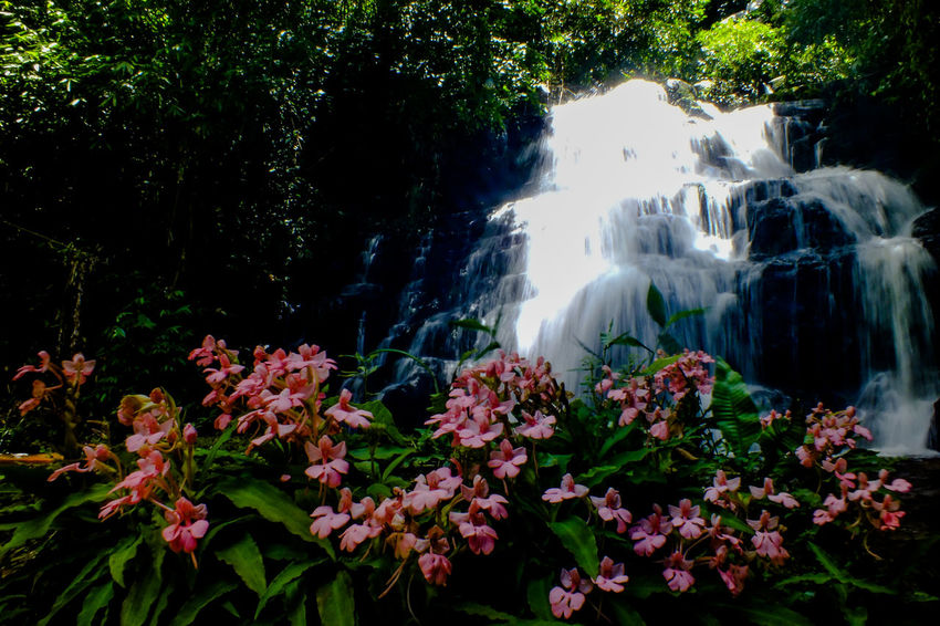 Mun dang waterfall 5th floor12 Waterfall Water Nature Beauty Beauty In Nature Flower Social Issues Landscape Tree Plant Springtime Scenics Outdoors No People Growth Forest Freshness Day Sky Snapdragon Wild Flowers EyeEmNewHere The Week On EyeEm Freshness Travel