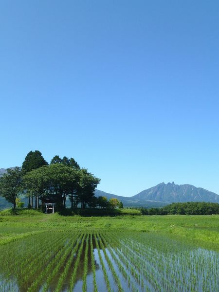 山の小さな神社。トトロみたい(*^^*) Naturelovers Mountains On The Road Getting Inspired Landscape Rice Field Japanese Shrine Japan