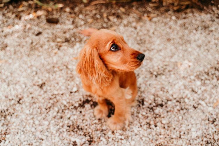 Portrait of cute dog sitting on footpath