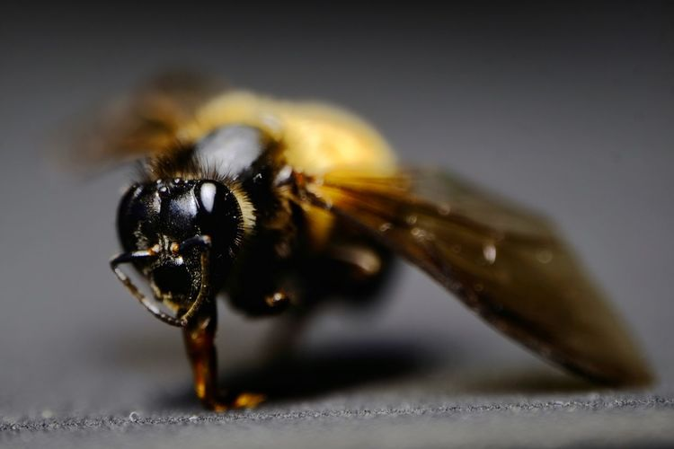 Insect One Animal Animal Themes Close-up No People Day Nature Bee 🐝 Bee 🐝queen B Is In The House