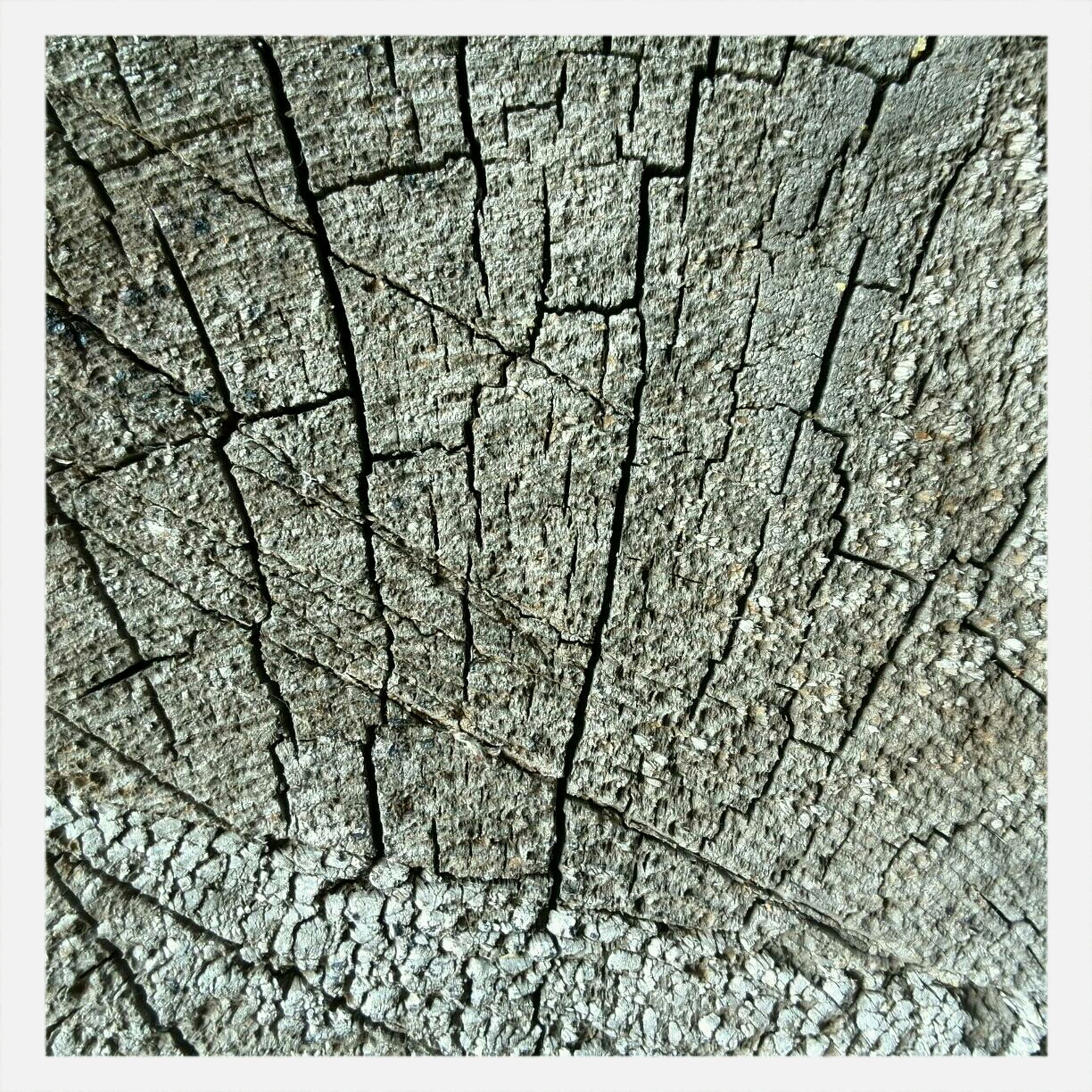 transfer print, full frame, backgrounds, auto post production filter, textured, pattern, natural pattern, nature, cracked, close-up, day, no people, rough, outdoors, high angle view, tranquility, dry, tree, detail, sunlight