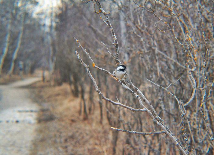 Bird Perching On Bare Tree Branch