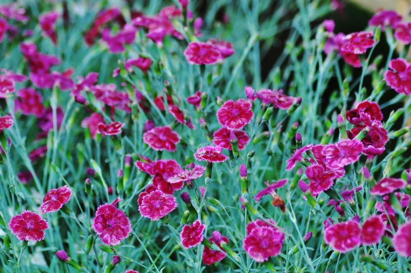 Flower Biology