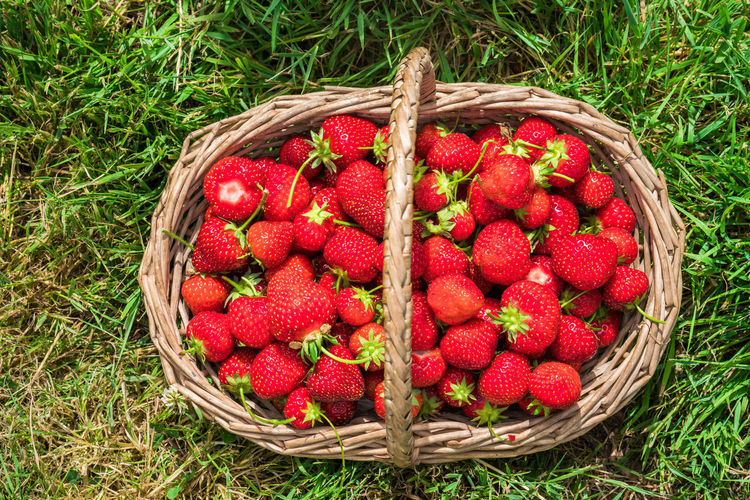 Directly Above Shot Of Strawberries In Basket On Grassy Field
