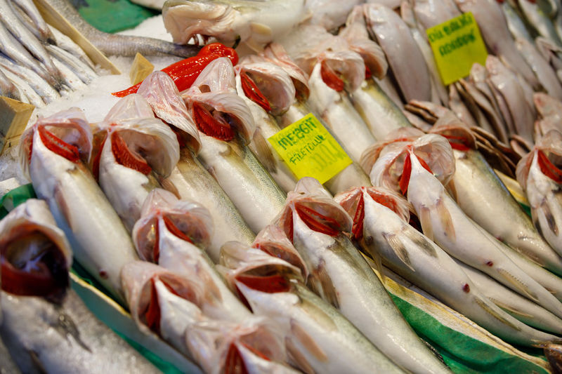 Market Fish FishMarket Istanbul Freshness Food And Drink Food Retail  Seafood For Sale No People Large Group Of Objects Vertebrate Animal Close-up Wellbeing Raw Food High Angle View Fish Market Abundance Healthy Eating Still Life