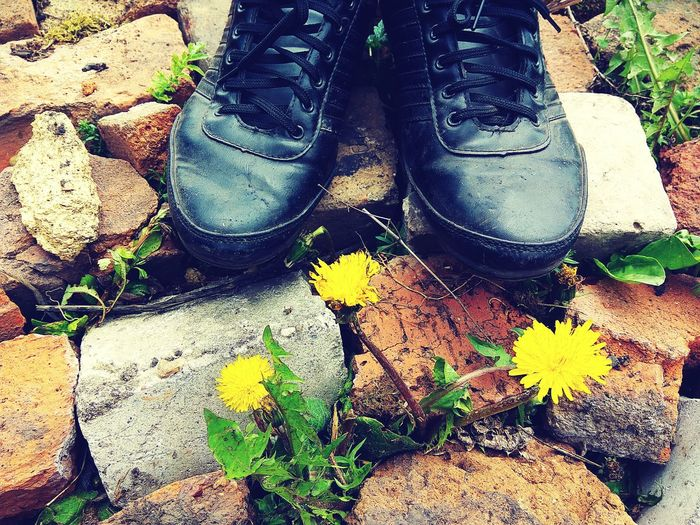 Textured  Close-up Outdoors Bricks Brickstones Shoes Stone Yellow Flower Sunlight Live For The Story Out Of The Box Low Section Human Leg Dandelion Seed Dandelion Sneakers ♥ Sneakers Flower Head Fashion Retro Standing Floor Plant Nature Beach Let's Go. Together. Paint The Town Yellow