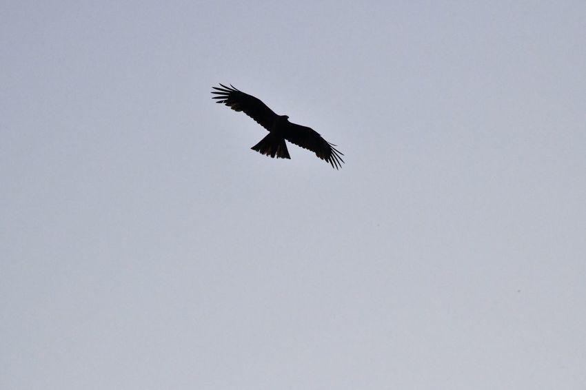Bird Flying Animals In The Wild Animal Low Angle View Animal Themes Animal Wildlife