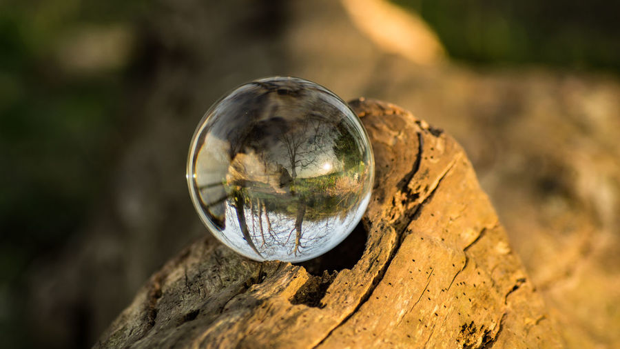 Close-up of glass ball on tree trunk