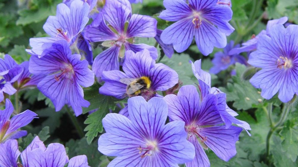 Bee at work Bumble Bee Bee Fly Flowers Garden Nature Outdoors Worker Bees