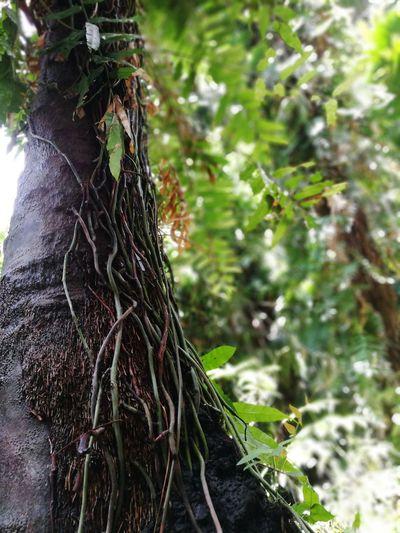 Green place 🍀🌱🌿 Tree Nature Forest Beauty In Nature Paepaelife Paepaetravel Paepaephotography Phonecamera EyeemPhotos