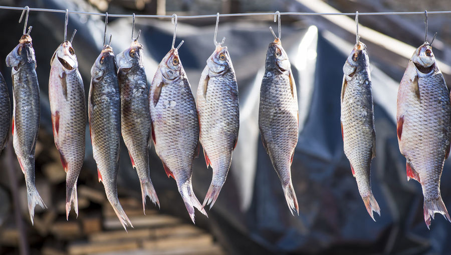 Close-up of fish hanging on clothesline