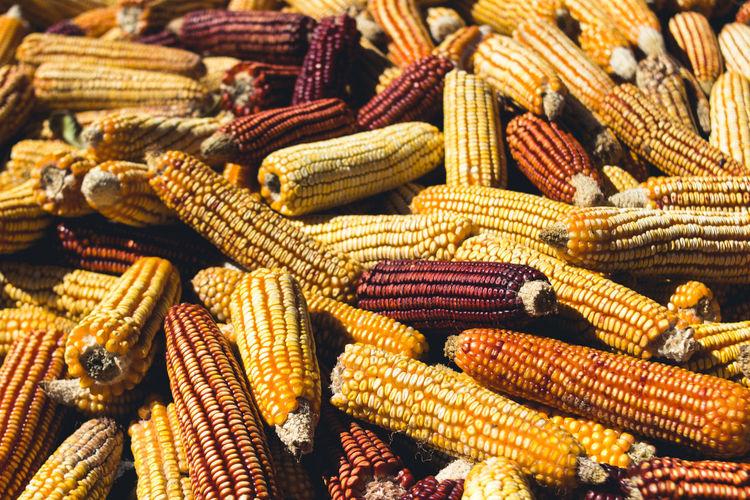 Full Frame Shot Of Corn
