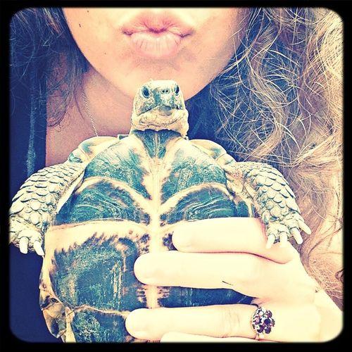 Tortoise Pet Vintagejewelry Grumpy