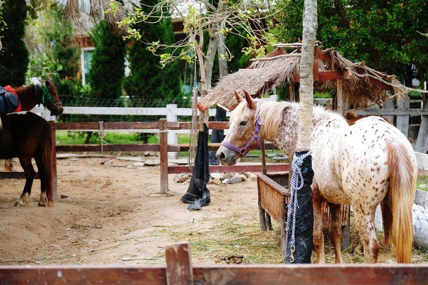 white horse Stall Standing Tree Forest EyeEm Nature Lover Animal Vintage EyeEm Selects Animal Themes Horse Traveling EyeEm Best Shots