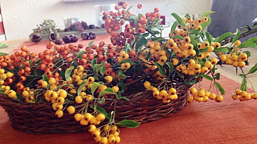 Freshness Plant Flower Flowering Plant No People Nature EyeEmNewHere Table Celebration Still Life Decoration