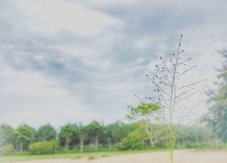 Sky Cloud - Sky Flowers