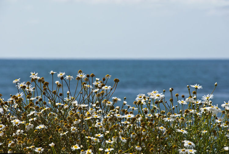 Beauty In Nature Clear Sky Close-up Day Flower Foreground Freshness Growth Horizon Over Water Nature No People Outdoors Plant Scenics Sea Sky Tranquil Scene Tranquility Water