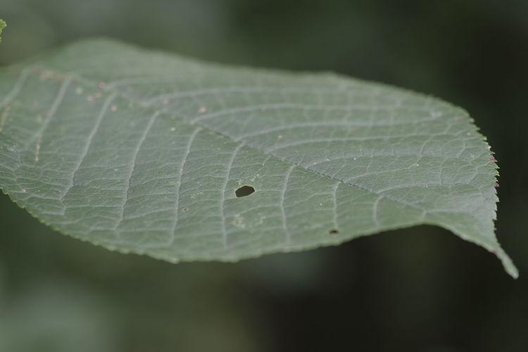 Close-up Nature