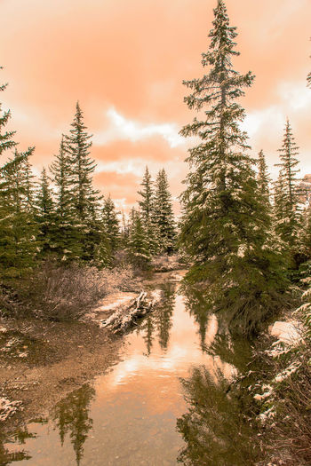 EyeEm Best Shots EyeEm Nature Lover Trees Beauty In Nature Canada Cloud - Sky Day Forest Growth Landscape Nature No People Outdoors Red Sky Reflections Scenics Sky Sunset Tranquil Scene Tranquility Tree Water Waterfront